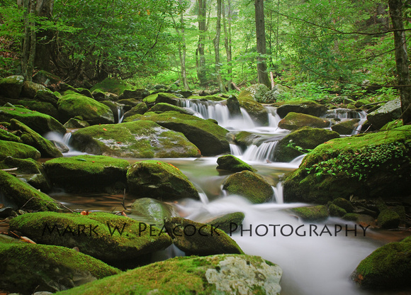 Mossy Mountain Stream